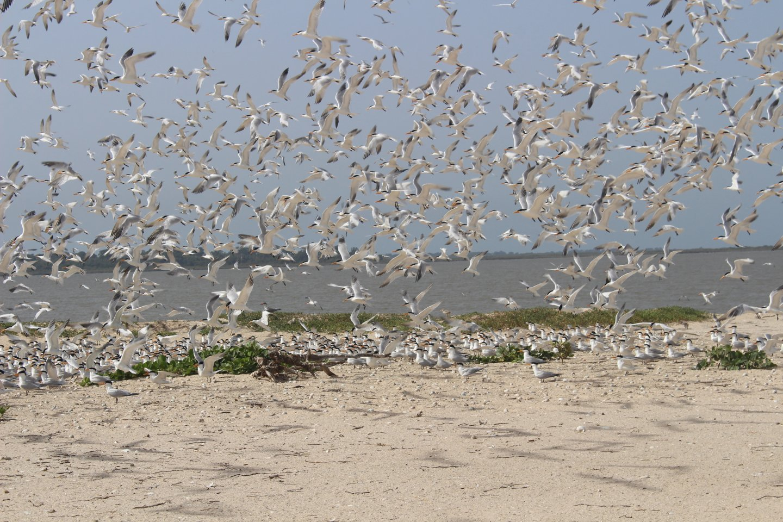 Guinea Bissau vogels op strand